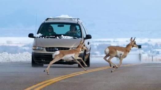 高速上遇到动物,应该怎么办?